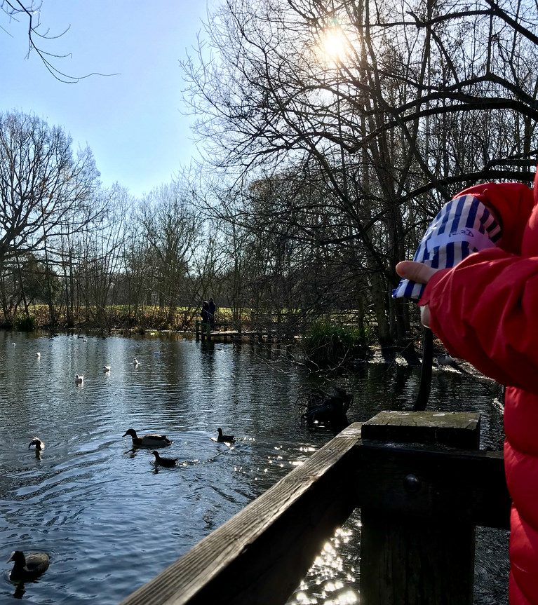 Duck feeding wandsworth park